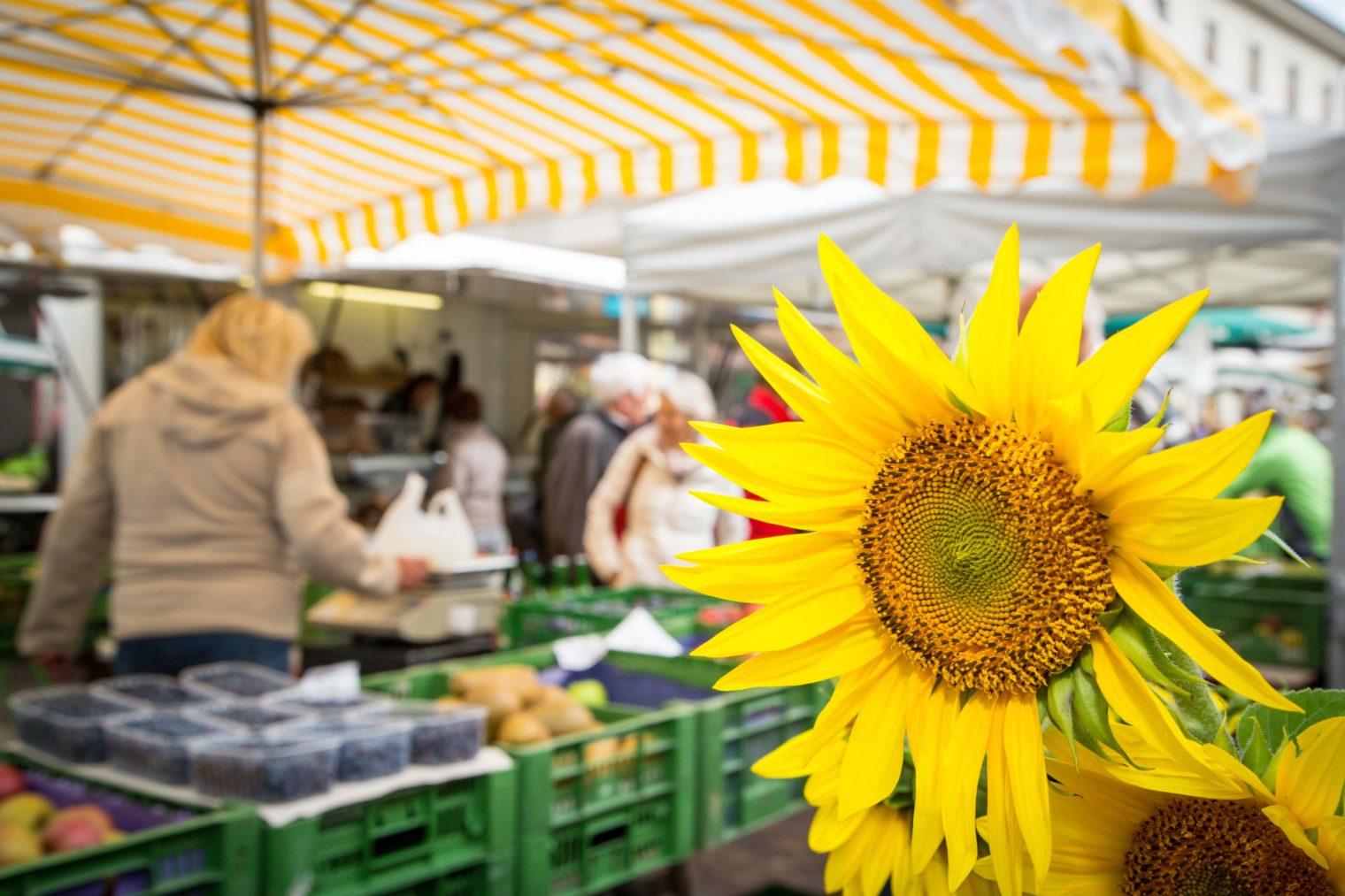 Nahansicht einer Sonnenblume am Leobener Bauernmarkt